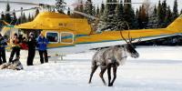 Crew members watch as a caribou is released on the Slate Islands off Ontario's North       Shore of Lake Superior over the weekend of Jan. 13-15, 2018. Seven caribou were moved       over the weekend off Michipichoten Island in hopes some of the herd will survive.       Credit: Ontario Ministry of Natural Resources and Forestry via Forum News Service