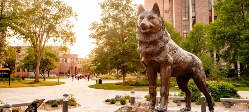 Husky statue on campus.