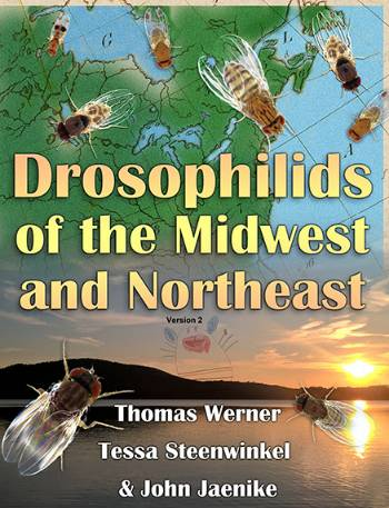 "Book cover of ""Drosophilids of the Midwest and Northeast"" by Thomas Werner, Tessa Steenwinkel, and John Jaenike"