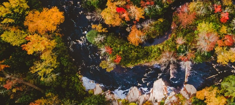 Drone view of forested stream.