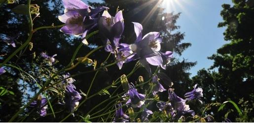 Purple flowers in a garden.
