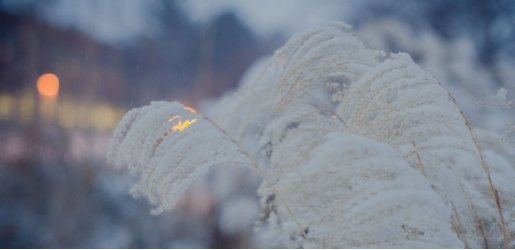 Photo of a fern covered with light snow, with blurred lights in the distance.