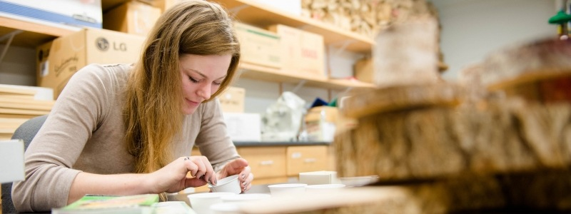 Student working on wood samples in the lab.