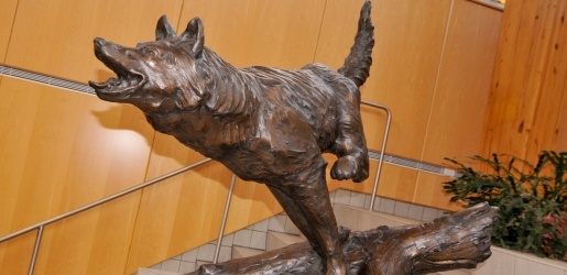 Bronze sculpture of a wolf.