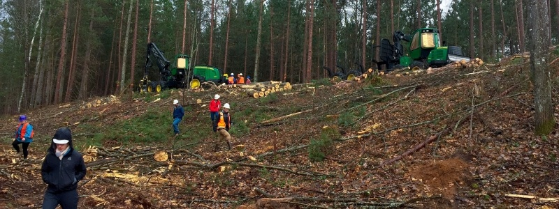 People at a logging site.