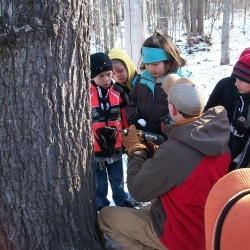 Student working with young children extracting syrup from a maple tree.