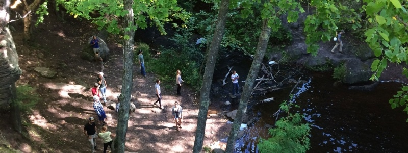 Overhead view of students walking through a forest.