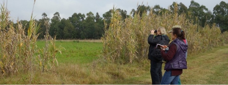 Bird watchers.