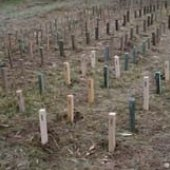 field decay stakes in place
