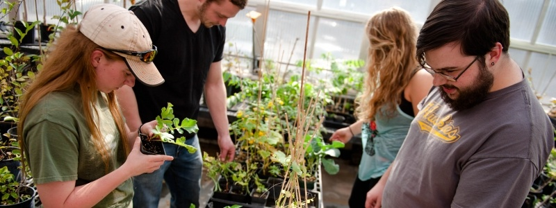 grad working with undergrad students working in greenhouse with aspen seedlings