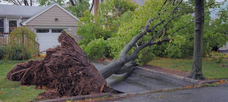 Tree uprooted in a neighborhood during a storm