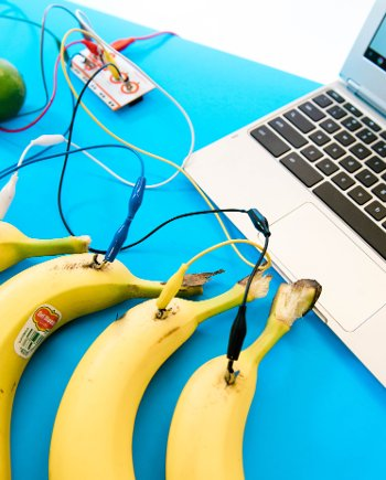 Bananas hooked up to a laptop.