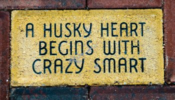 """A Husky heart begins with crazy smart"" paver."