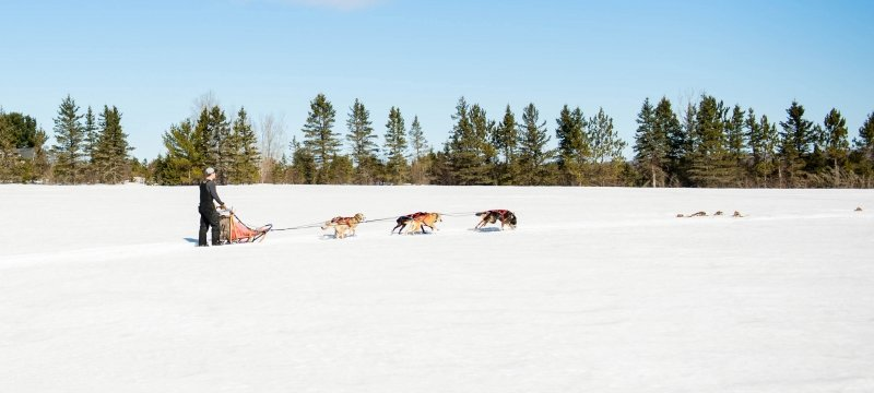 Sled dog team pulling a sled and person through a snow covered field.