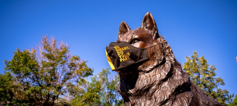 Bronze husky statue on campus with a face covering.