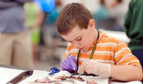 Child dissecting a fish.