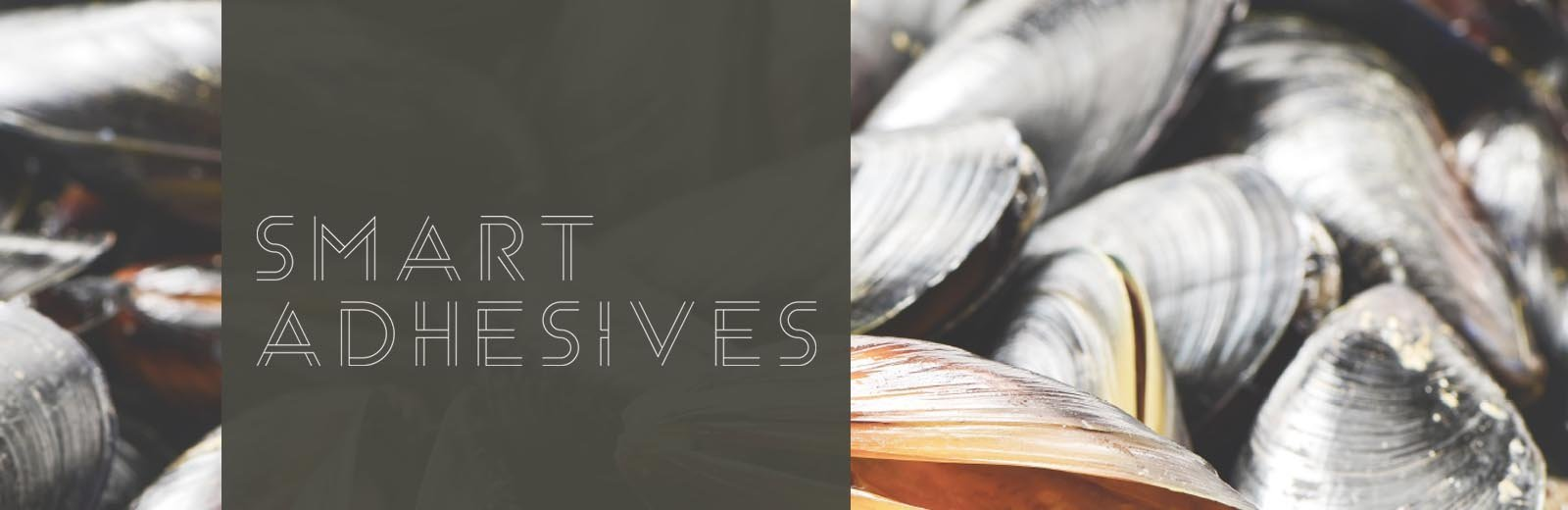 Smart Adhesives text over mussel shells.