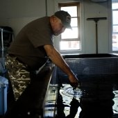 A man in camouflage pants and a baseball cap leans over a water tank in a fish hatchery.