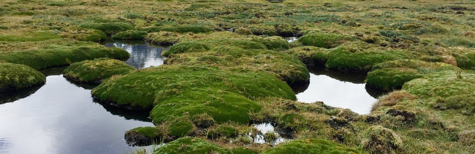 Peatlands and water.