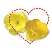 Two yellow flowers with a heart around them.