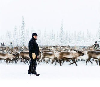 A Sámi herder in a winter reindeer corral near Jokkmokk, Sweden.