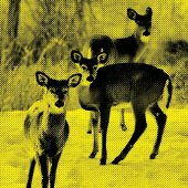 Yellow colored photo of three deer.