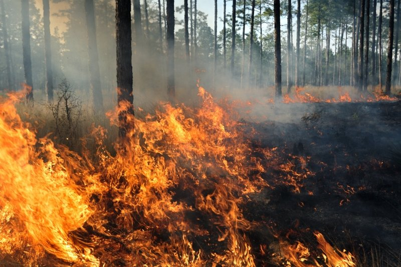 Trees and brush on fire in a forest.