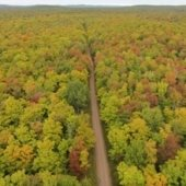 Aerial view of a road going through a forest.