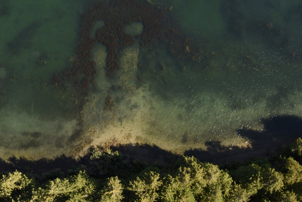 Aerial view of Eurasian watermilfoil.