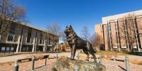 Husky statue on campus with clear blue sky.