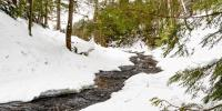 A stream flows through a snowy pine forest.