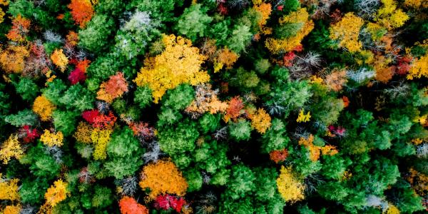 An aerial view of the Ford Forest and Research Center shows autumnal color shifts       and diversity in tree species.
