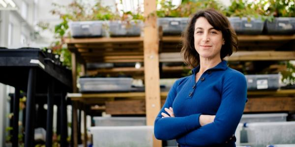 Erika Hersch-Green, evolutionary biologist and assistant professor of biological sciences,       has received a National Science Foundation CAREER award to investigate how the effects       of increased nitrogen and phosphorus alter the primary productivity of some plants,       while reducing the growth of others.