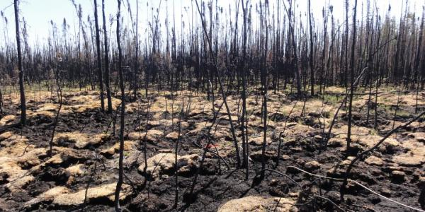 Peatlands, previously thought to be impervious to fire, do burn in extremely hot wildfires       and release incredible amounts of sequestered carbon into the atmosphere. Image Credit:       Liza Jenkins