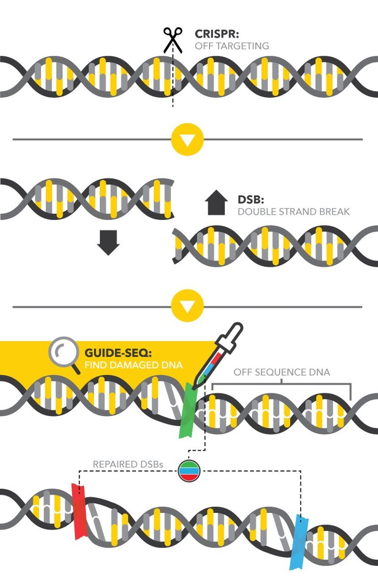 GUIDE-seq: A DNA Duct Tape to mark the DNA Damage ...
