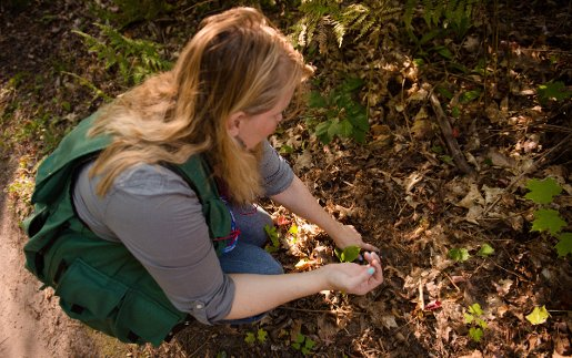Tara Bal examines the forest floor for signs of earthworm damage.