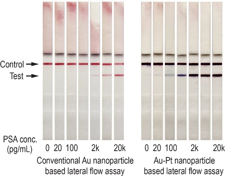 Gold nanoparticles appear red on test strips; the high-sensitivity mode developed by Xia's team is much darker on the test strip and shows a two-magnitude increase in sensitivity.