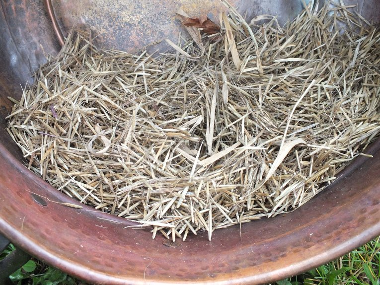 Harvested, dried manoomin doesn't look like rice until it's parched, jigged, winnowed and sorted.
