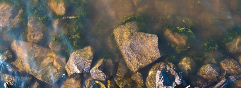 Rocks and aquatic plants in river water.