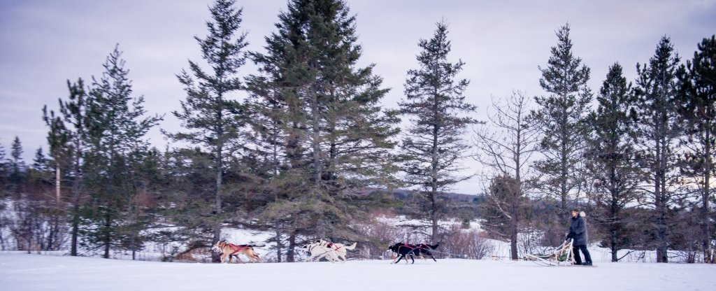 A team of sled dogs runs through a snowy landscape, with a male musher on the sled.