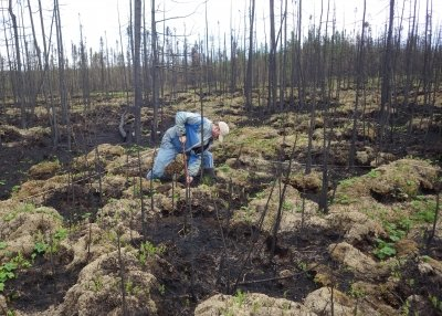 A person takes samples in a peatland.