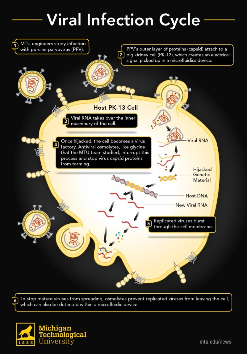 illustration of a virus hijacking a cell to replicate more viruses