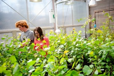 Two people in a greenhouse look at the plants.