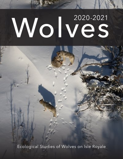 """The cover of the Isle Royale Winter Study 2021 report, which depicts one wolf lying bedded in the snow while two more stand nearby. The title reads """"Wolves"""" and the subtitle reads """"Ecological Studies of Wolves on Isle Royale."""""""