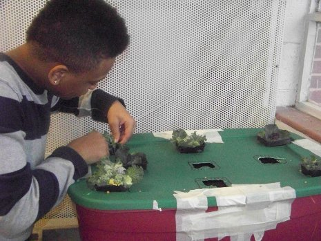Benjamin Mays High School Enterprise: Growing kale in a tote