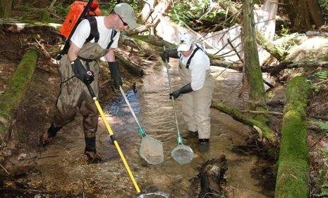 Nancy Auer, associate professor of biological sciences, at right, and Marty Holtgren, a biologist with the Little River Band of Ottawa Indians, conducting an electro-fish survey of the fish in one of the tributaries to the Big Manistee River in July 2011.