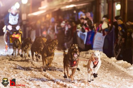 Dogs race through downtown Calumet.