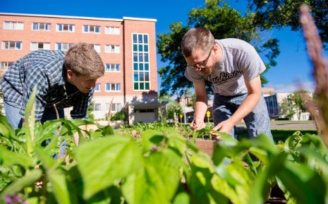 Alex Bruns, left, and Tony Hayes tend the vegetables in their sustainable garden.
