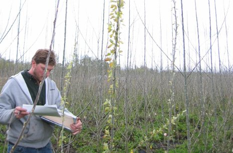 A researcher performs phenological observations in an activation tagging population field trial in Oregon.  Photo: Steven Strauss,