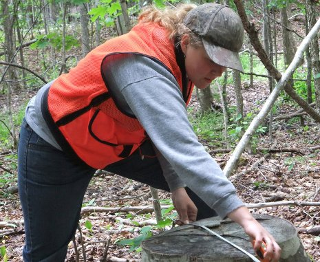 Maija Erikson, a 2010 Michigan Tech alumna, collects field data during the northern hardwood forests study.